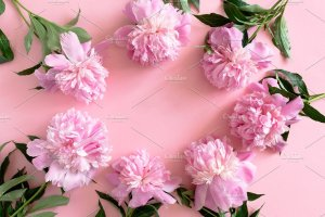 Creative Market - Choosing the right stock image - border frame of peonies - www.feedourlife.blog